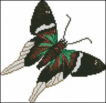 Butterfly - Click Image to Close