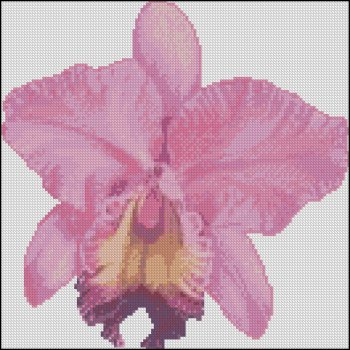 Pink Orchid - Click Image to Close